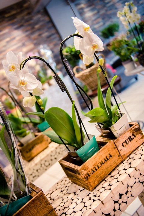 L'Atelier MBB, Photographe Publicitaire d'Art Floral sur Rouen, Paris & Deauville